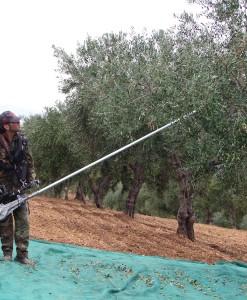 Tresač maslina Cifarelli SC 105 2